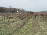 from the bottom of the vineyard, looking at Roots, Inspire Moore, and the quintessential red barn